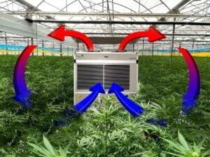 cannabis dehumidifier