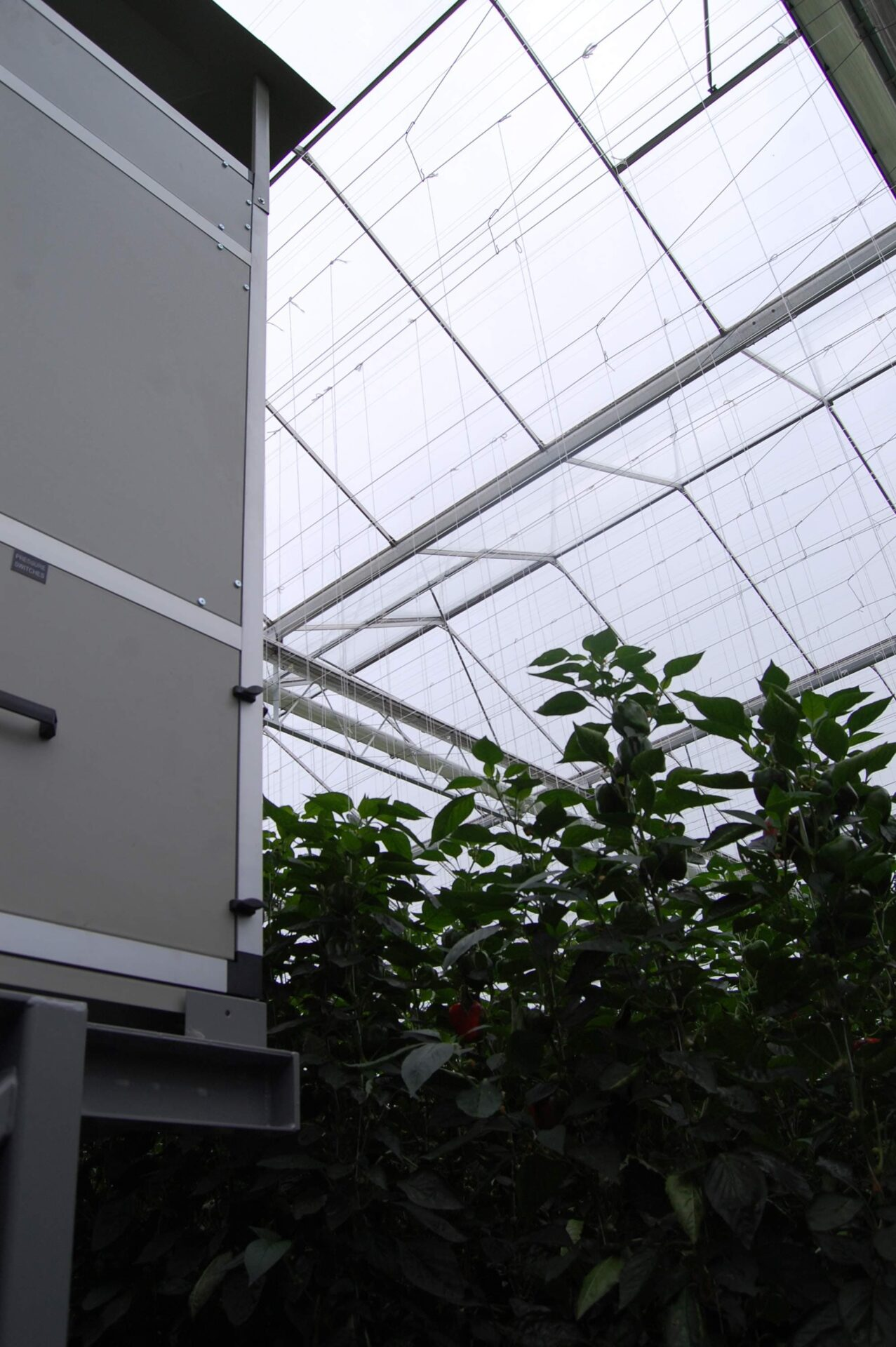 dehumidifier with plants