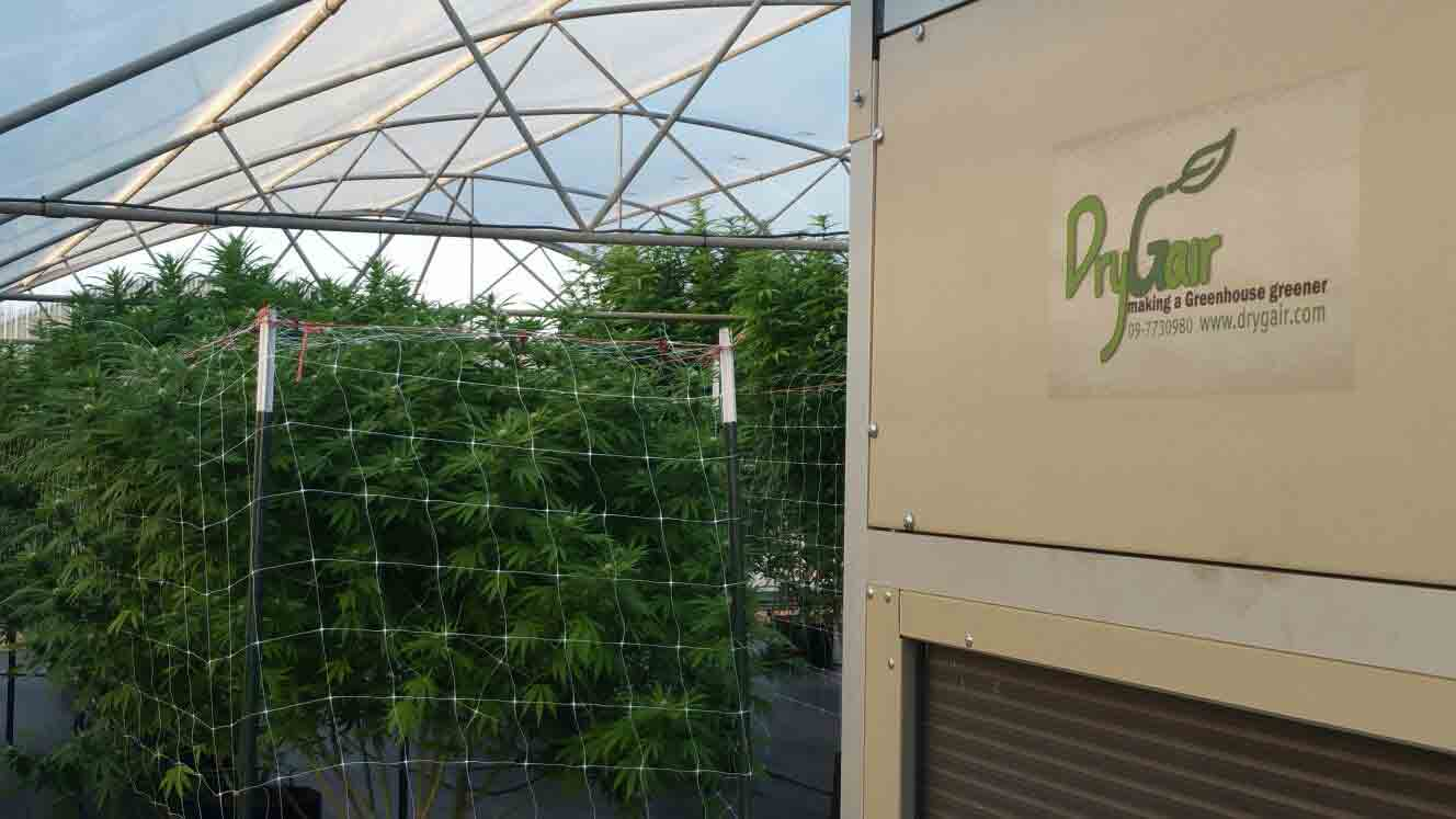 Cannabis Greenhouse with dehumidifier