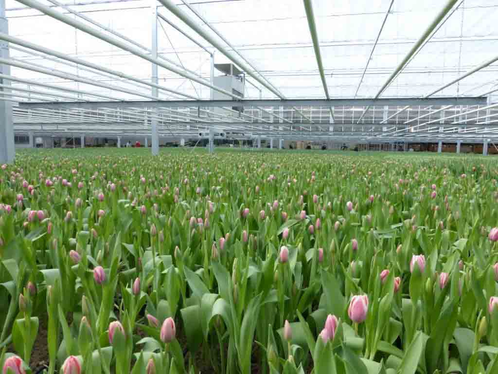 greenhouse flowers with dehumidifier