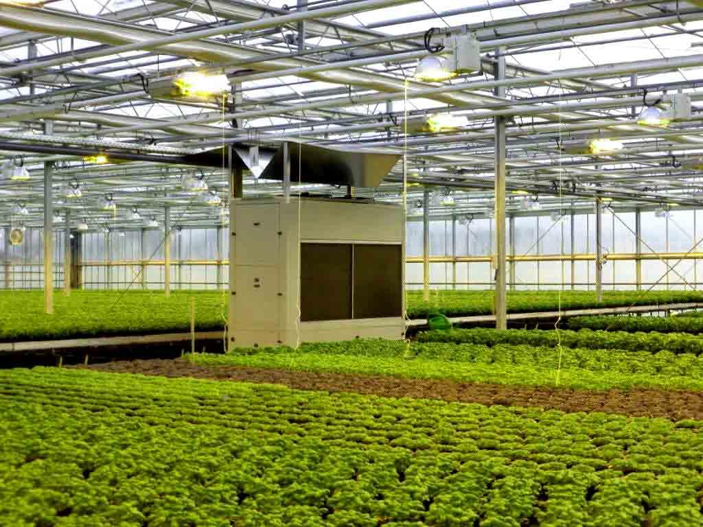 dehumidifier in greenhouse