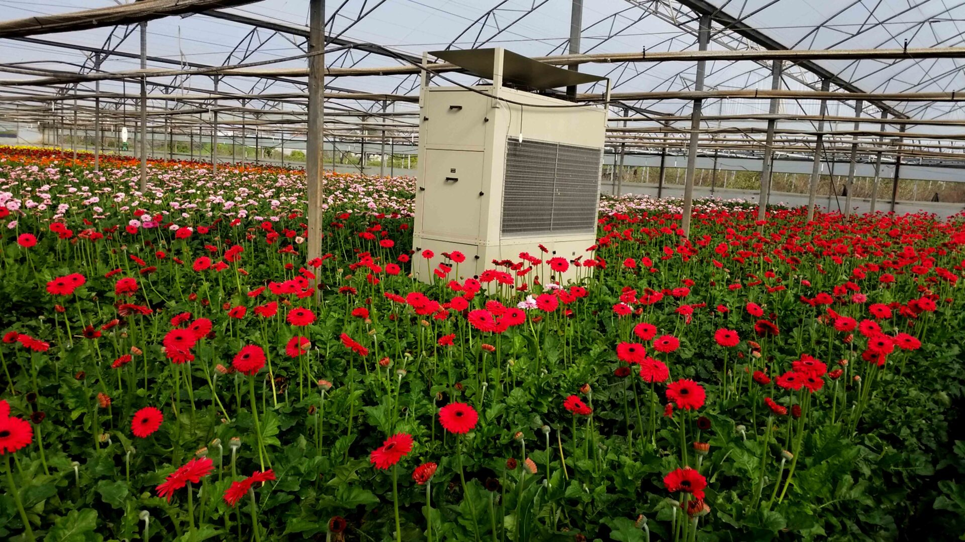 red flowers with drygair dehumidifier in the center