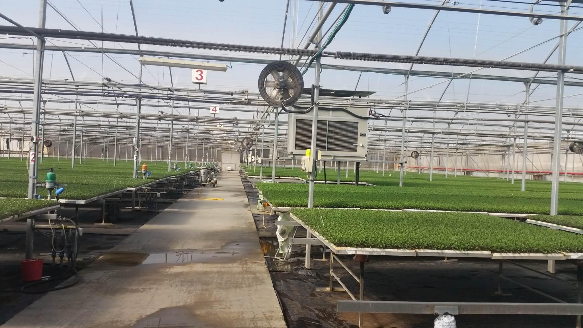 La parte superior se puede colocar encima de las mesas de cultivo para ahorrar espacio