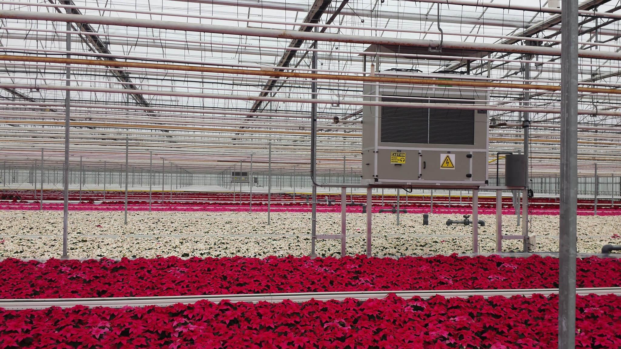 DG-12, en cuadros sobre el cultivo. Invernadero  de flores