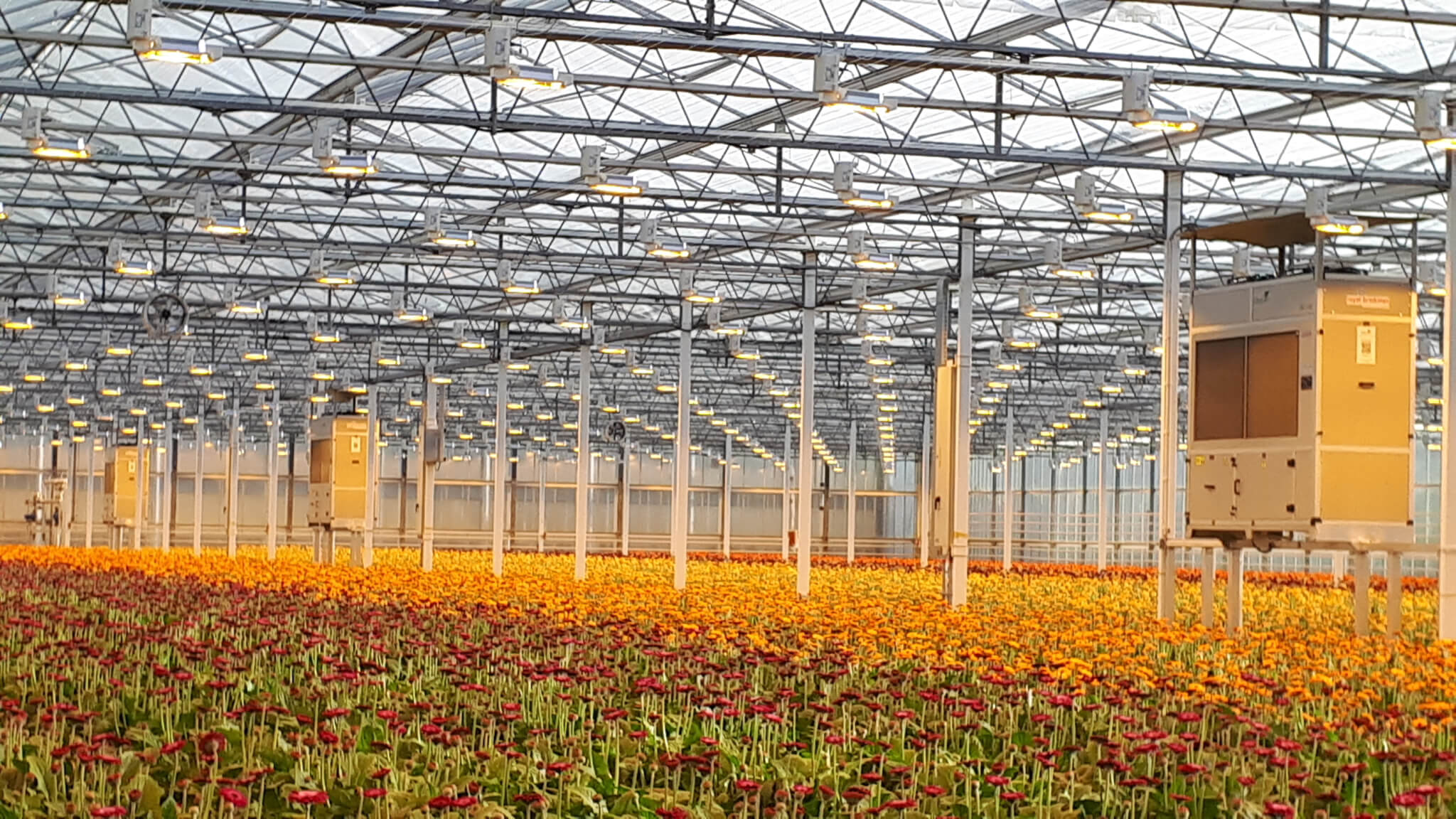 3 DG-12 units on frames. Gerberas greenhouse