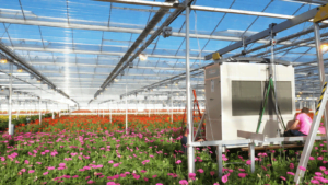 DryGair dehumidifiers gerbera greenhouse