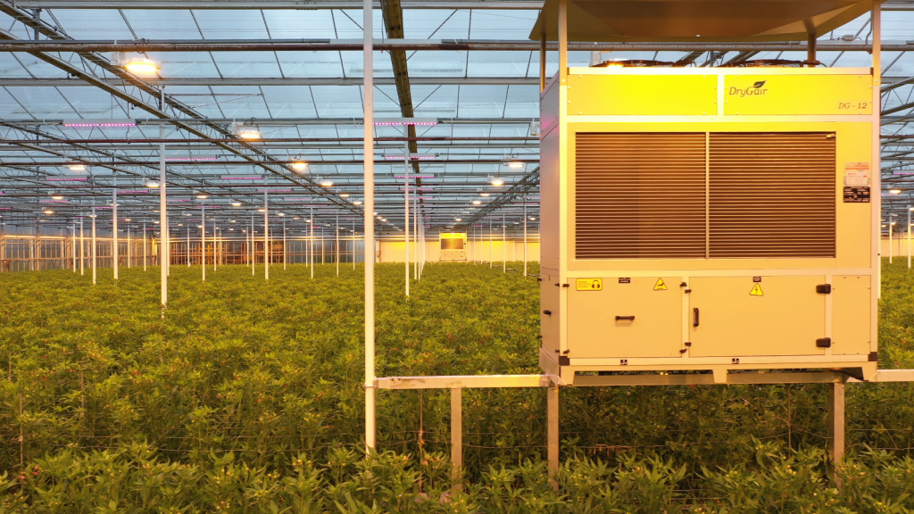 humidity control in greenhouses by using dg12 dehumidifier