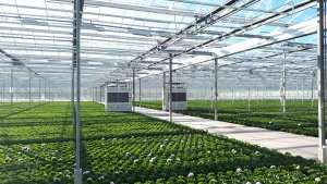 Flower greenhouse with DryGair dehumidifiers
