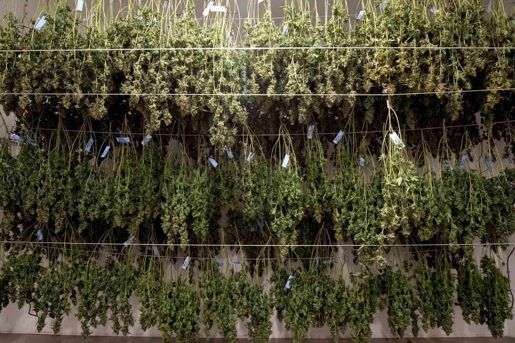 drying room cannabis_drygair